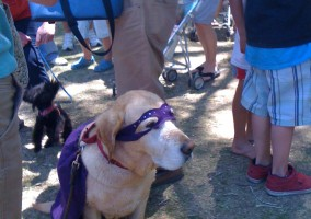 Super Dog at the Durango River Days festival.